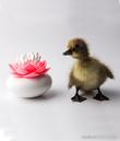 Qualy Lotus Cotton Bud Holder (Pink)