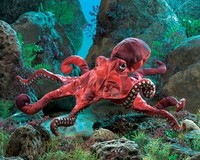 Folkmanis: Hand Puppet - Red Octopus