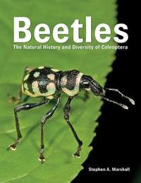 Beetles by Stephen A Marshall