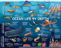 Puzzlebilities: 500 Piece Puzzle - Ocean Life by Depth image