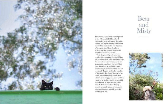 The New Zealand Cat by Rachael Hale McKenna image