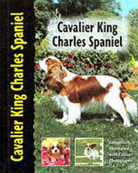 Cavalier King Charles Spaniel by Juliette Cunliffe image