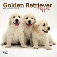 Golden Retriever Puppies 2020 Mini Wall Calendar by Inc Browntrout Publishers