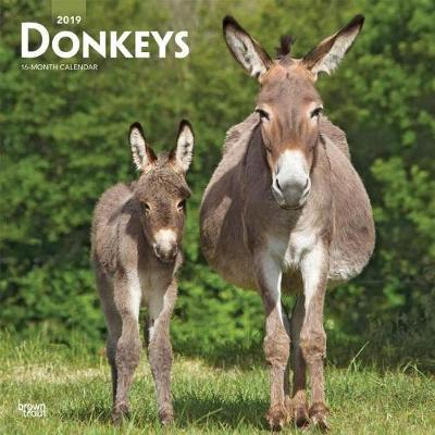 Donkeys 2019 Square Wall Calendar by Inc Browntrout Publishers image
