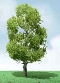 JTT: N Scale Birch Trees - 3 Pack