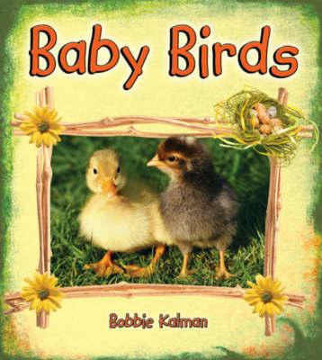 Baby Birds by Bobbie Kalman