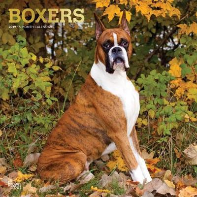 Boxers 2019 Square Foil by Inc Browntrout Publishers