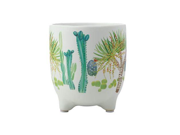 Maxwell & Williams: Royal Botanic Garden Arid Garden Planter Pot - Dracaena (14cm)