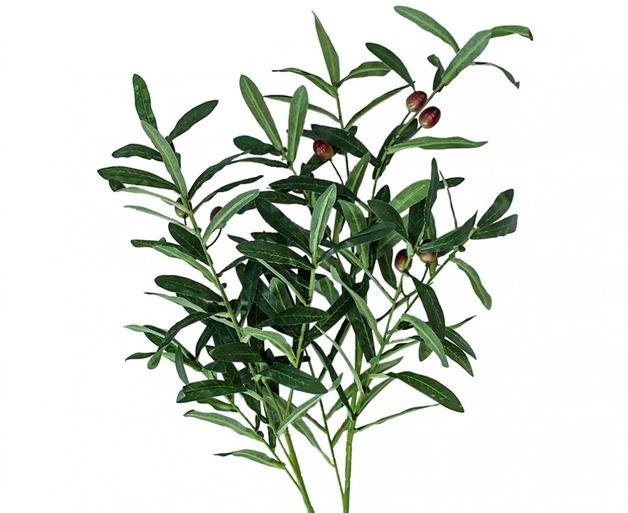LaVida: Stem Olive Branch