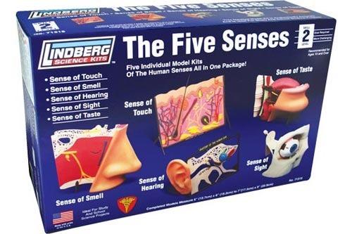 Lindberg The Five Senses Model Kit