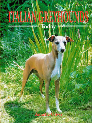 Italian Greyhounds Today by Annette Oliver image