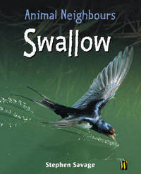 Swallow by Stephen Savage image