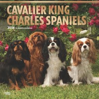 Cavalier King Charles Spaniels 2018 Square Wall Calendar by Inc Browntrout Publishers