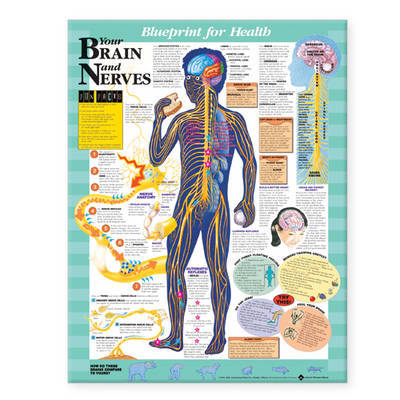 Your Brain and Nerves Chart image