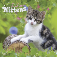 I Love Kittens 2019 Square Wall Calendar by Inc Browntrout Publishers