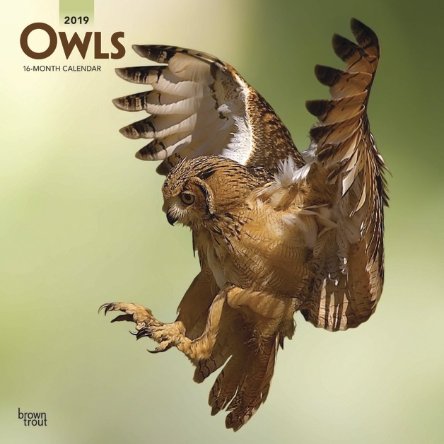 Owls 2019 Square Wall Calendar by Inc Browntrout Publishers