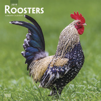 Roosters 2019 Square Wall Calendar by Inc Browntrout Publishers