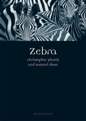 Zebra by Christopher Plumb