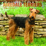 Airedale Terriers 2018 Square Wall Calendar by Inc Browntrout Publishers