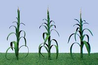 JTT: Corn Stalks O-Scale (28 Pack)
