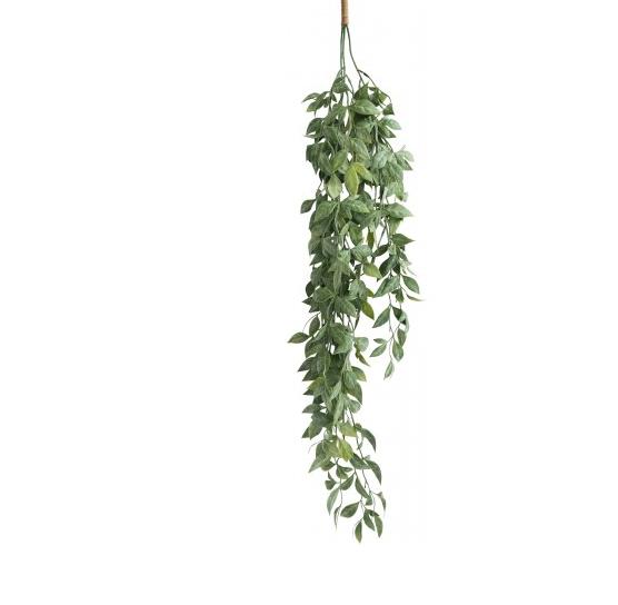Hanging Vine