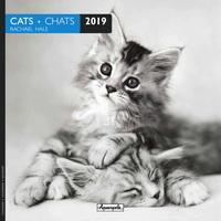 Aquarupella: Cats Black and White 2019 Wall Calendar
