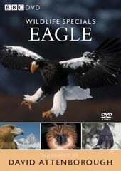Wildlife Specials - Eagle on DVD