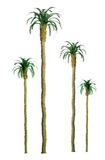 "JTT Scenic Palm Trees 3"" (4pk) - N Scale"