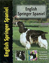 English Springer Spaniel by Haja Van Wessem image