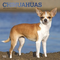 Chihuahuas 2019 Square Wall Calendar by Inc Browntrout Publishers