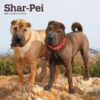 Shar Pei 2020 Square Wall Calendar by Inc Browntrout Publishers