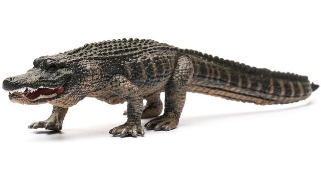 CollectA - American Alligator