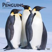 Penguins 2019 Square Wall Calendar by Inc Browntrout Publishers