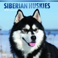 Siberian Huskies 2018 Square Wall Calendar