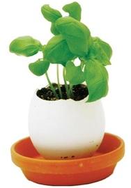 Eggling: Mini Plant Kit - Basil