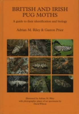 British and Irish Pug Moths - a Guide to their Identification and Biology by Adrian M. Riley