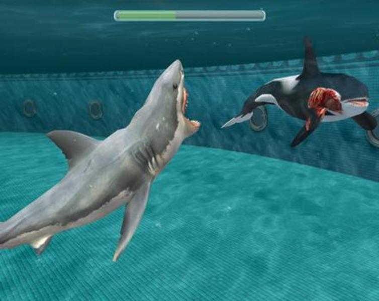 Miami shark online game