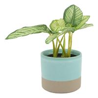 Sema Pot Oasis (11x10cm)