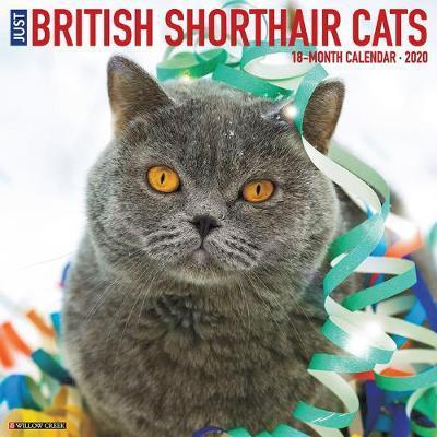 British Shorthair Cats 2020 Wall Calendar by Willow Creek Press