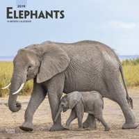 Elephants 2019 Square Wall Calendar
