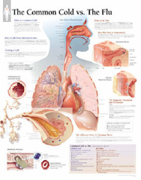 Common Cold and the Flu image