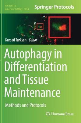 Autophagy in Differentiation and Tissue Maintenance image