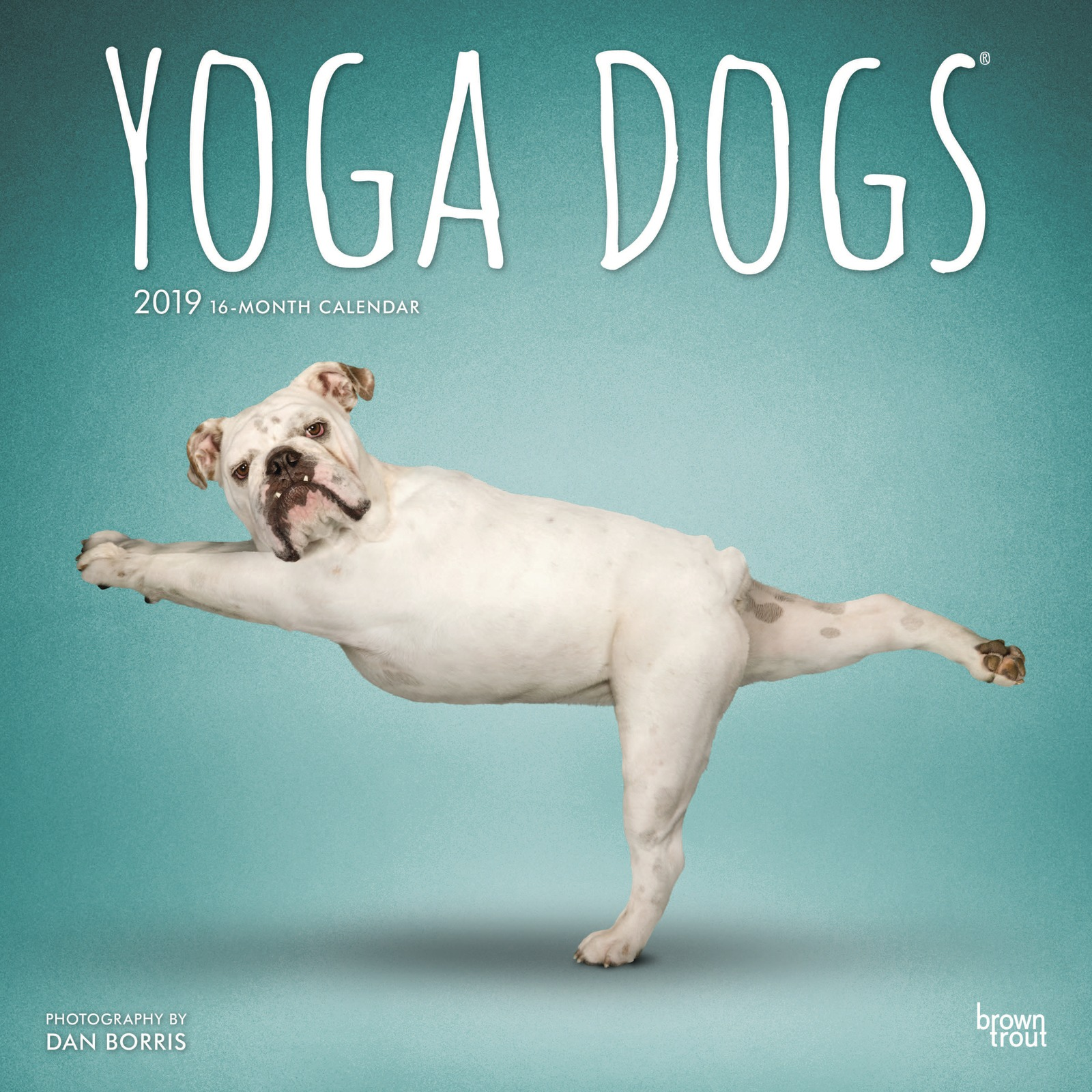 Yoga Dogs 2019 Square Wall Calendar by Inc Browntrout Publishers image