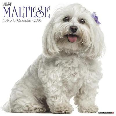 Just Maltese 2020 Wall Calendar (Dog Breed Calendar