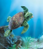 Folkmanis: Hand Puppet - Sea Turtle