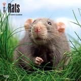 2018 Rats Wall Calendar by Inc Browntrout Publishers