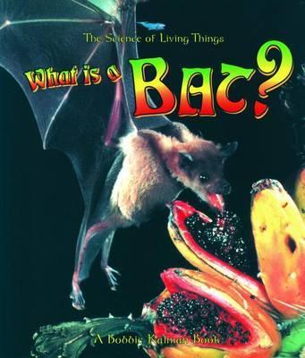 What Is A Bat by Bobbie Kalman