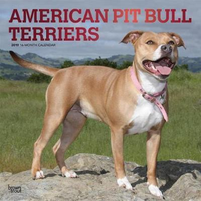 American Pit Bull Terriers 2019 Square Foil by Inc Browntrout Publishers image