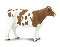Safari - Ayrshire Cow