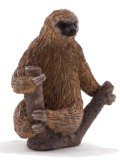 Animal Planet - Two Toed Sloth